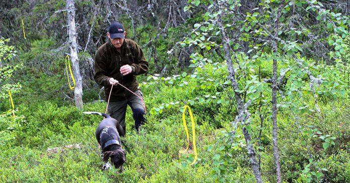 träna viltspår och eftersök