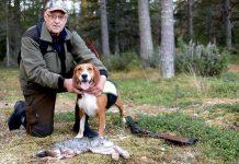 Harjakt hagelbössa stövare hamiltonstövare skogshare Conny Lundström