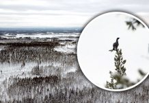 Toppfågeljakt med jaktgymnasiet vid Älvdalens Utbildningscentrum