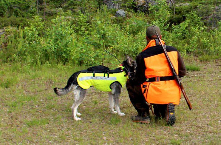 Test skyddsväst hundväst vildsvinsväst