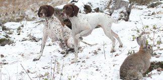 Hundskolan ledarskap