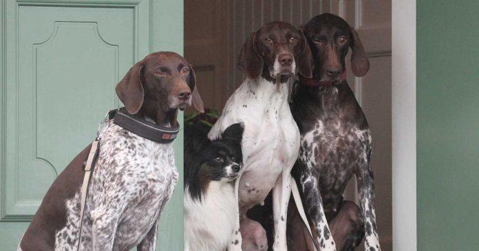 Hundskolan, släppa ut hunden