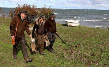 Rabbisjakt på Gotland