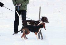problematiska hundmöten