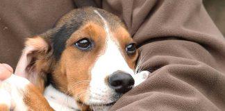 Hundskolan: Att skaffa en ny jaktkamrat