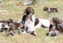 Hundskolan - Parning och dräktighet