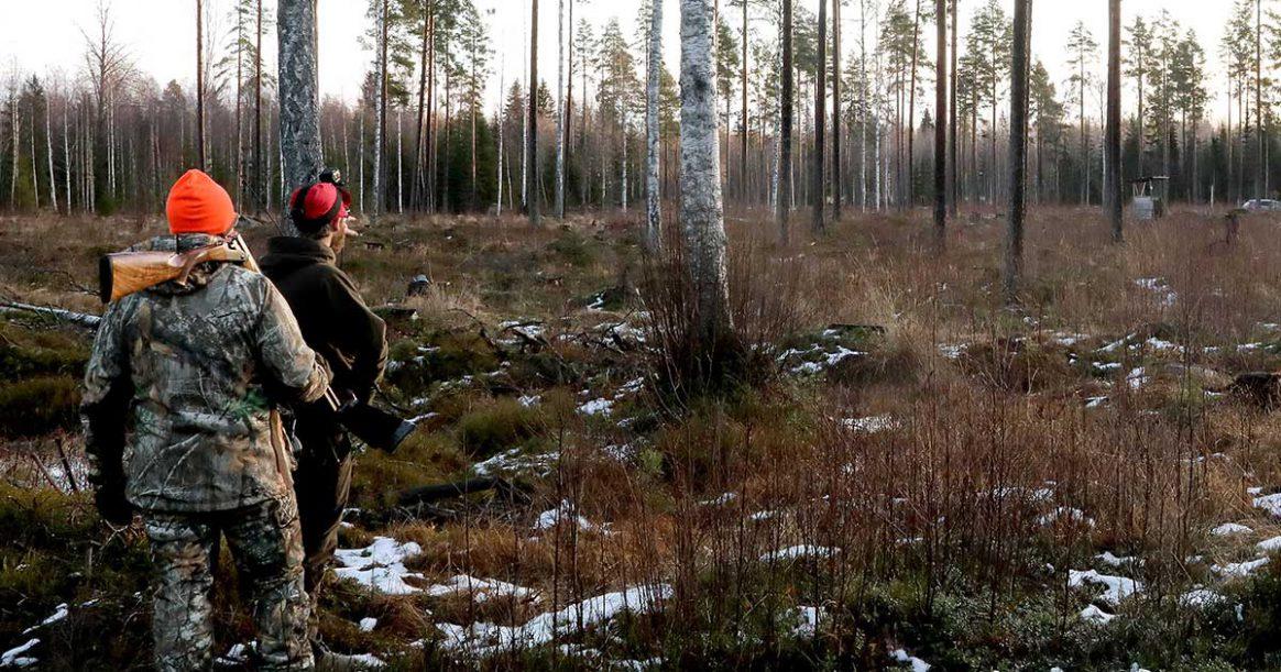 Rådjursjakt med drever