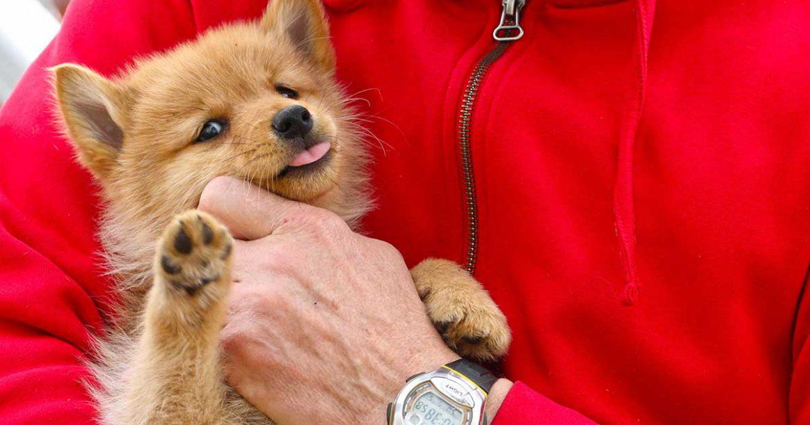 Hundskolan, hundvalp