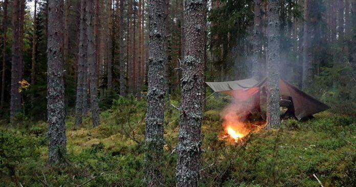 Tarp sova i skogen