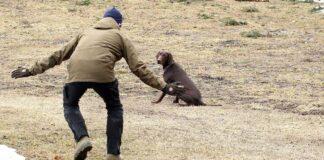 Hundträning inkallning