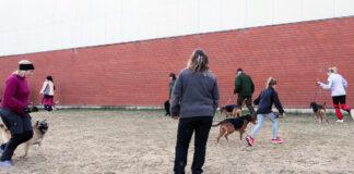 Träna hundutställning
