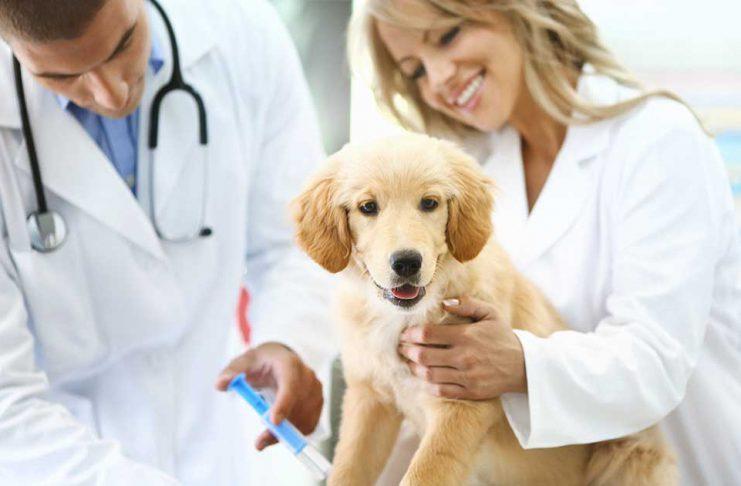 Vaccination hund